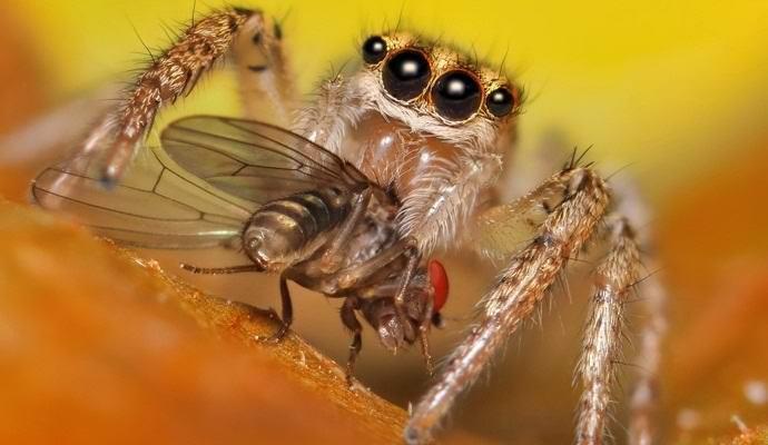 Пауки съедают в год больше, чем весят все люди планеты