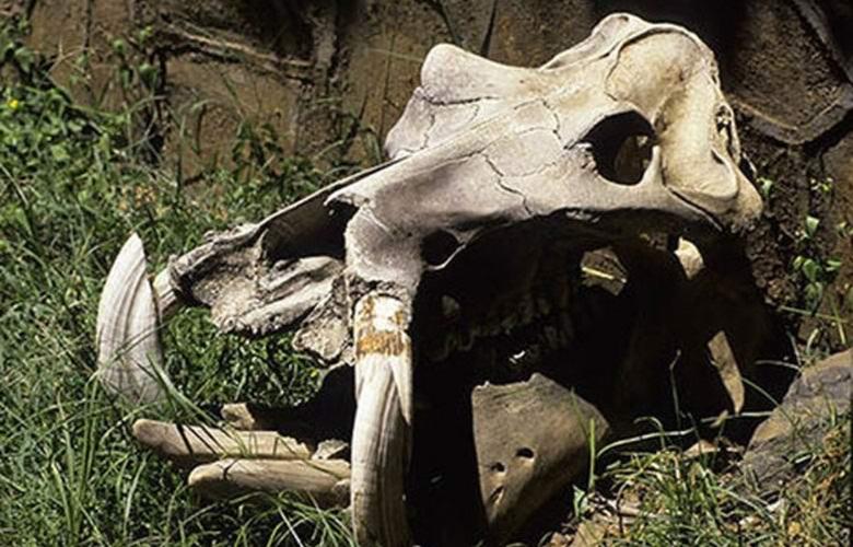 Череп дракона обнаружили в Африке