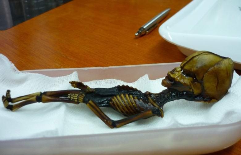 Атакамского гуманоида признали мутантом, а не инопланетянином
