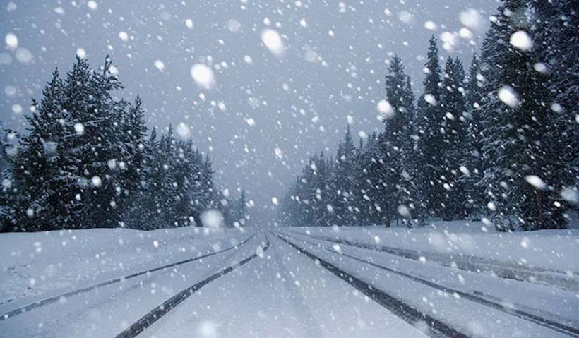 Снег с живыми насекомыми выпал в Башкирии (видео)