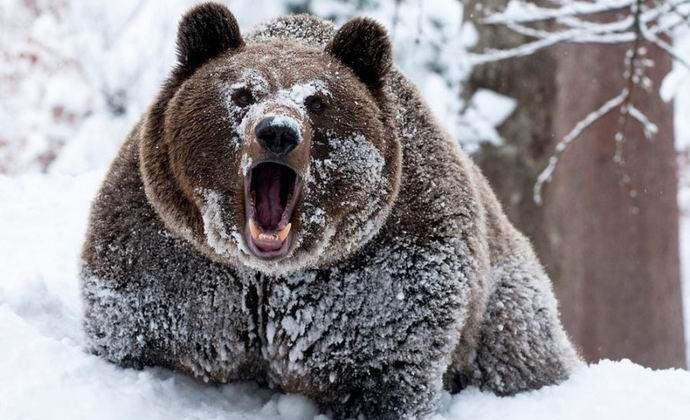 Сноубордистка не подозревала, что за ней гонится гризли