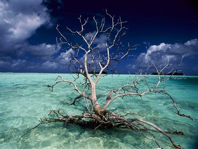 Мистический убийца - остров Пальмира (8 фото)