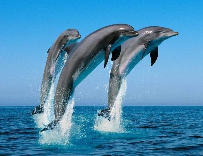 Британцы изучат язык дельфинов, чтобы найти их связь с инопланетянами (2 фото + видео)