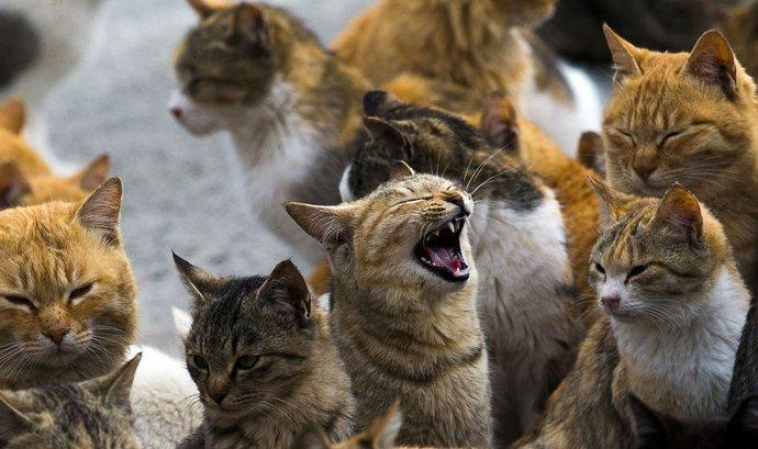 Гуманитарная помощь для Острова кошек пришла вовремя