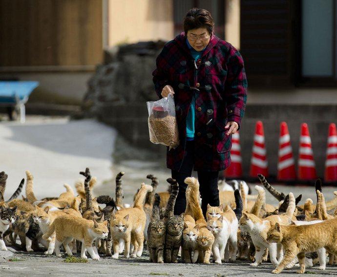 Гуманитарная помощь для Острова кошек пришла вовремя (10 фото + видео)