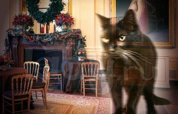 Демонический кот Белого Дома – предвестник больших бед (4 фото + видео)