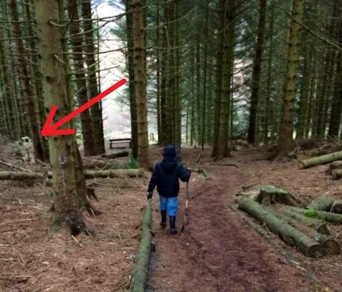 Шотландец сфотографировал в лесу похожего на астронавта гуманоида (2 фото)