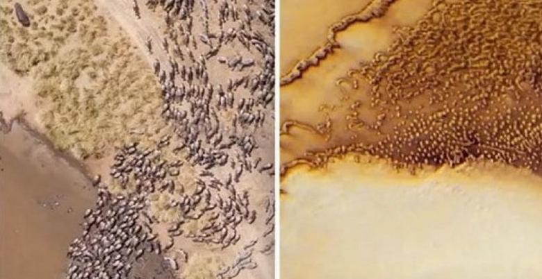 На Марсе, возможно, найдены животные