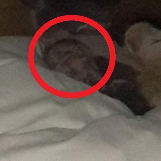 Шотландец сфотографировал пугающую сущность в постели спящей дочери