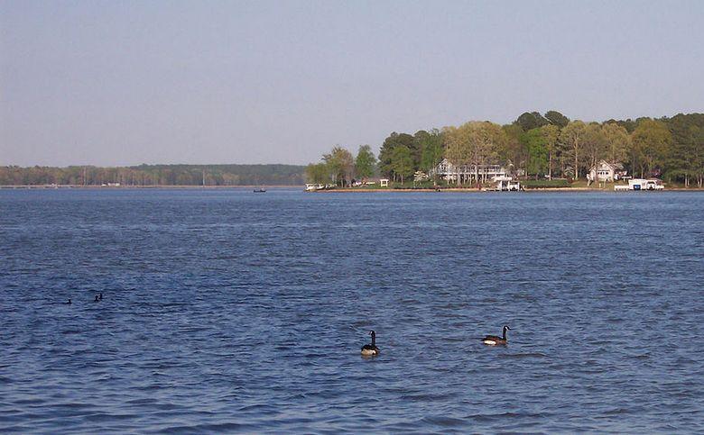 Голубого озерного монстра заметили в Северной Каролине