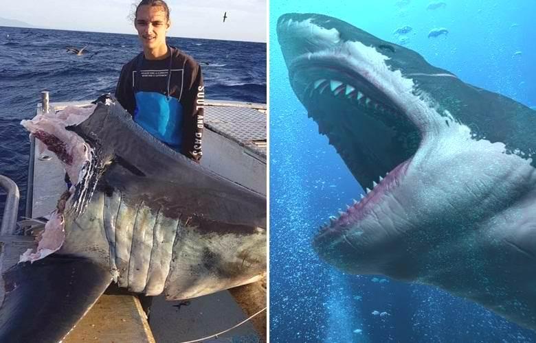 Океанский монстр легко справился с гигантской акулой