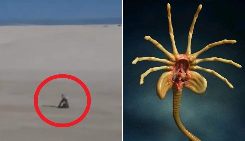 «Пришельца» заметили в мексиканской пустыне