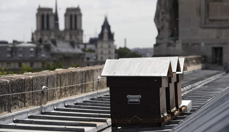 180 тысяч пчел чудом пережили пожар в Соборе Парижской Богоматери