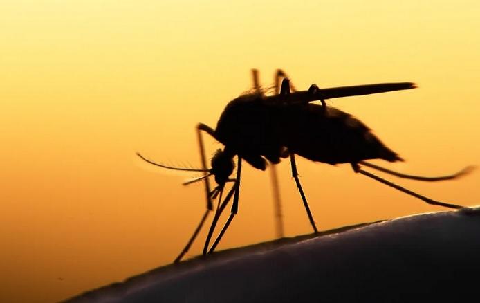 Как сделать себя невидимым для комаров