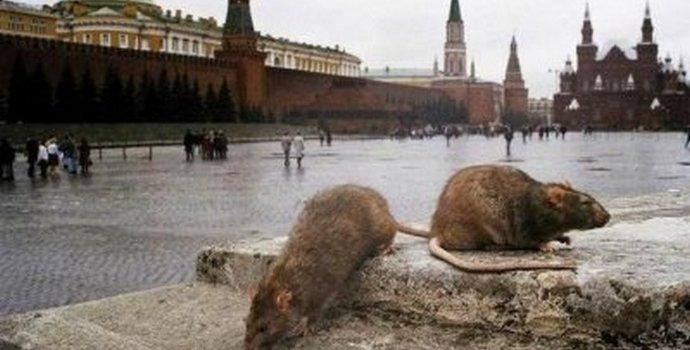 Украинцев предупредили об инфекции: объявления о тифе заметили Львовяне - Цензор.НЕТ 4462