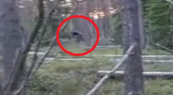 Российские школьники сняли в лесу монстра (2 фото + видео)