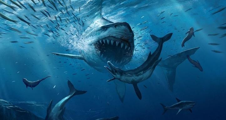 Самая большая акула в мире мегалодон фото