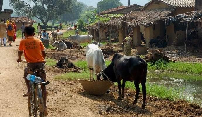 Индийскую деревню поразила загадочная эпидемия самоубийств