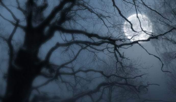 Деревья тоже засыпают с наступлением ночи