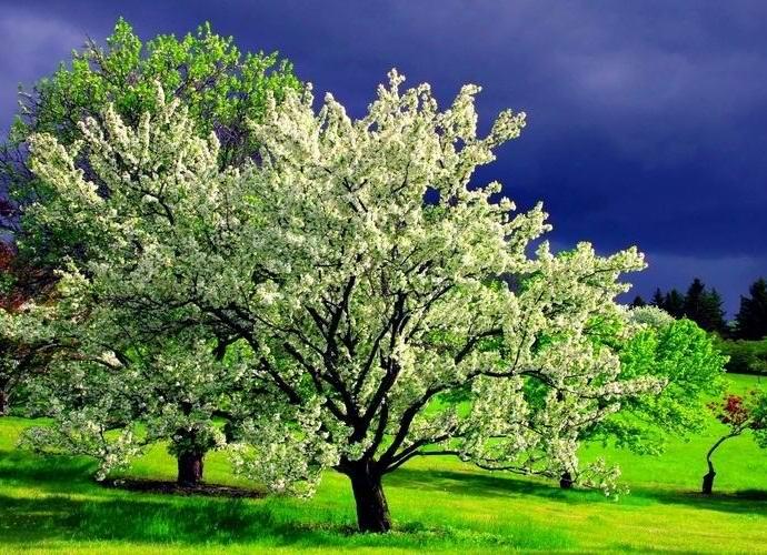 Деревья тоже засыпают с наступлением ночи (2 фото)
