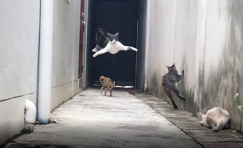 Группа котов подстерегла своего обидчика в подворотне – и вот что из этого вышло