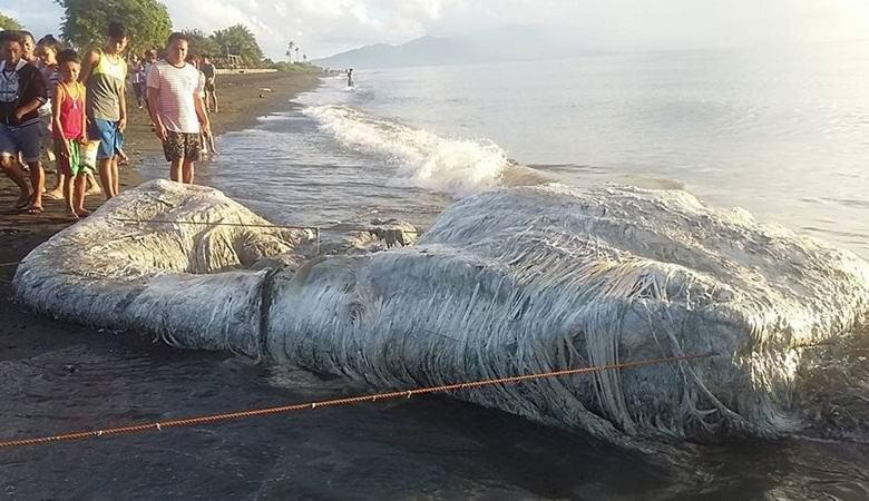 Загадочное существо обнаружили на Филиппинах