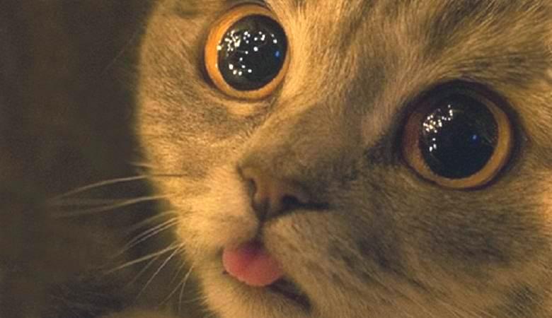 Загадочные сияющие шары в подвале заинтересовали кота