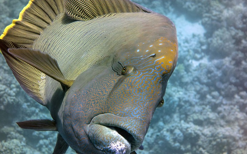 У рыб началась депрессия из-за коронавируса