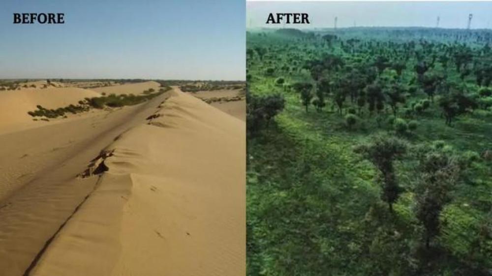 Китайская пустыня Му-Ус за 60 лет превратилась в оазис