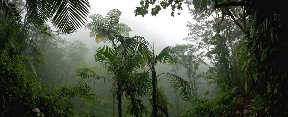 Ледниковый период начинается с тропических лесов
