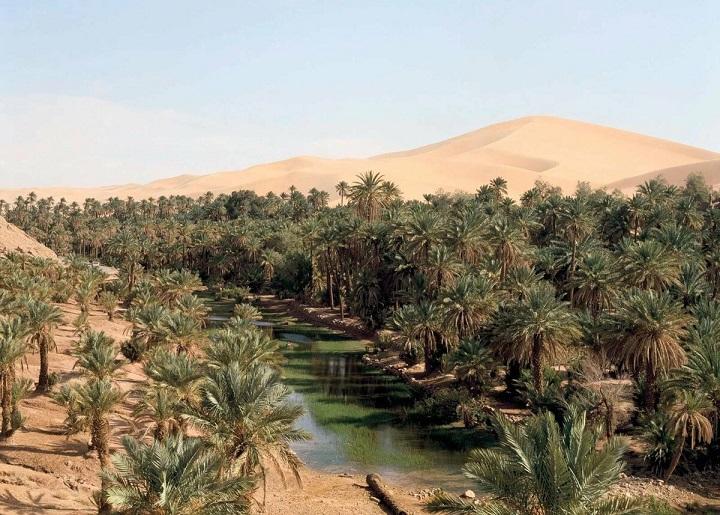 Глобальное потепление превратит Сахару в цветущий сад