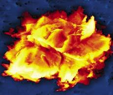 Электронное изображение микроорганизма, найденного во льду озера Восток и названного учеными «клингон». Он сохранялся в течение 400 000 лет и, вероятно, неизвестен современной науке