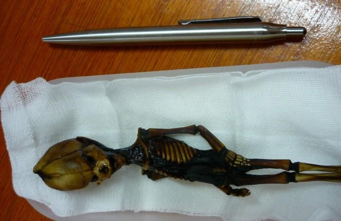 Скелет феи мог бы стать серьезным доказательством (6 фото + 2 видео)
