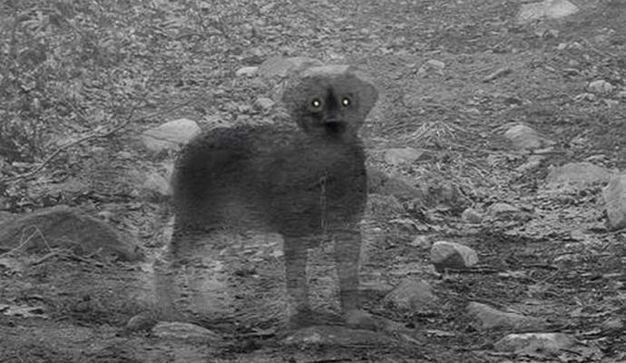 Самые странные и необычные призраки (9 фото + видео)