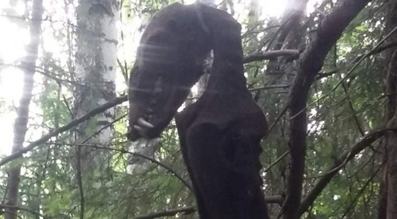 В Таганроге нашли повешенную чупакабру