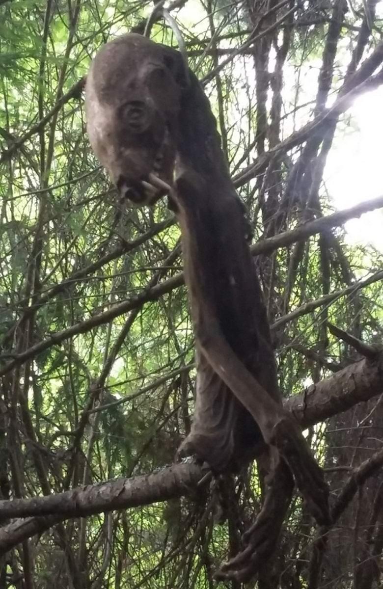 В Таганроге нашли повешенную чупакабру (2 фото)