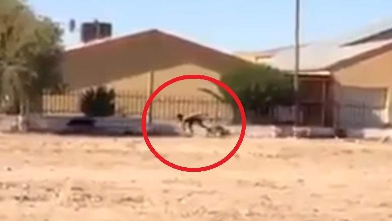 В ЮАР сняли на видео легендарного человека-пса? (2 фото + видео)