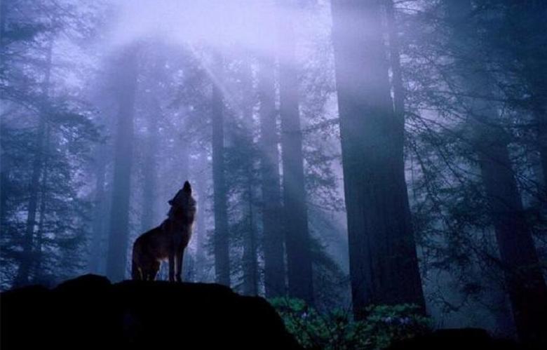 Непонятный зверь напал на человека с собакой в лесу