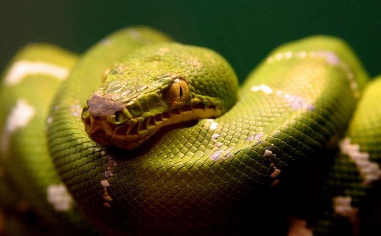 Самые большие змеи, попавшие на видеокамеру