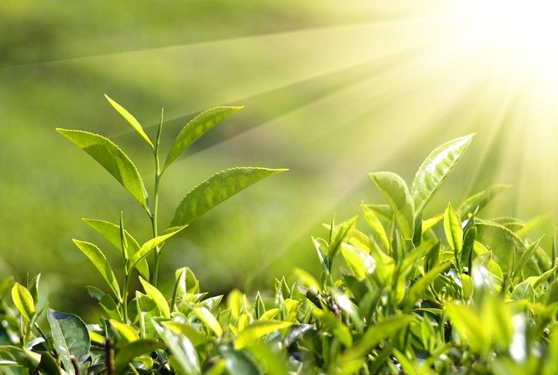 Оказывается, растения могут издавать звуки