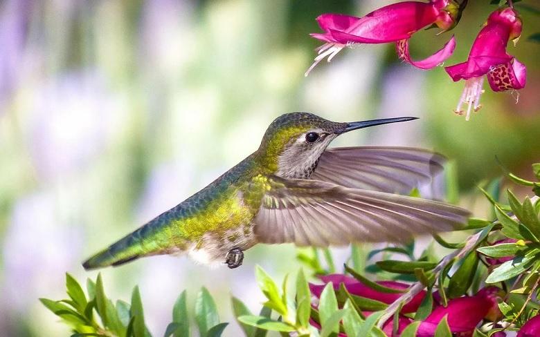 Колибри видит такие цвета, которые человек не может даже представить
