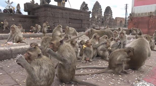 Голодные обезьяны захватили таиландский город