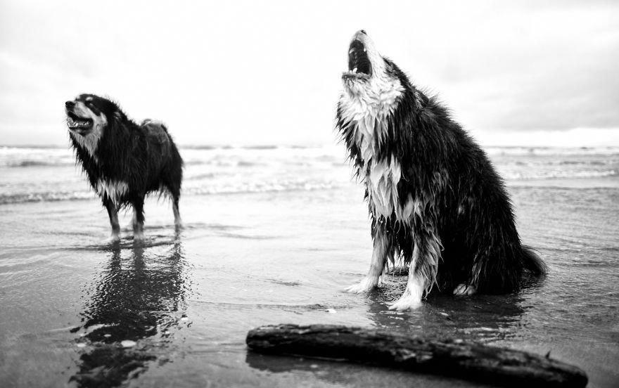 Бесследно исчезают не только люди, но и домашние животные