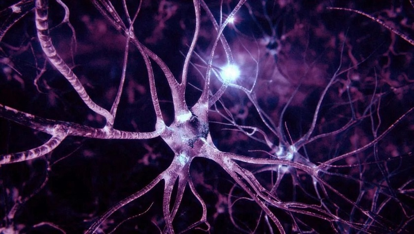 Поднятие тяжестей укрепляет нервную систему