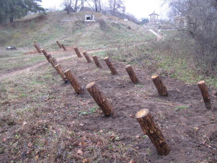 Что за странные «пирамиды» встречаются в лесах России