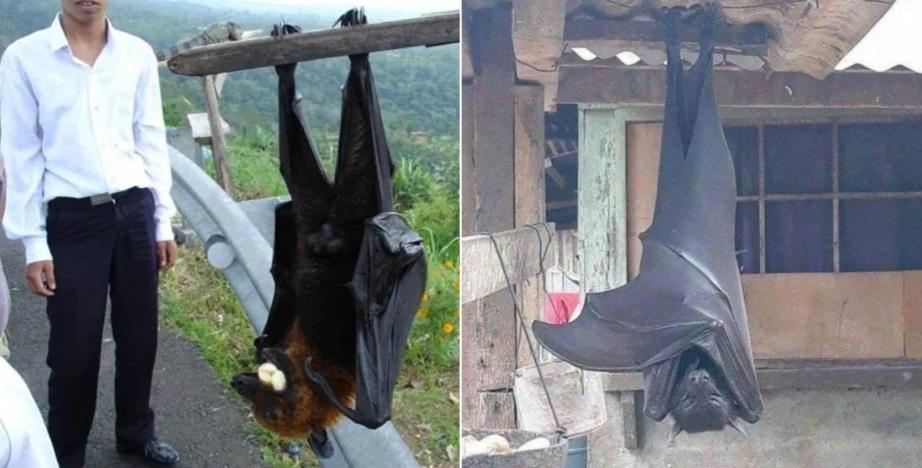 Фото летучей мыши размером с человека напугало пользователей Сети