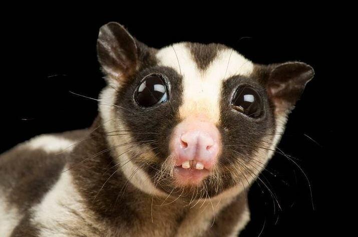 10 животных, внешний вид которых вызывает улыбку