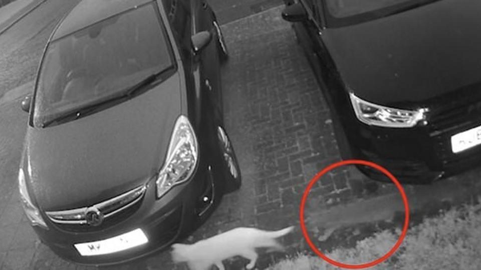 Женщина уверена, что запечатлела на видео «кота-призрака»