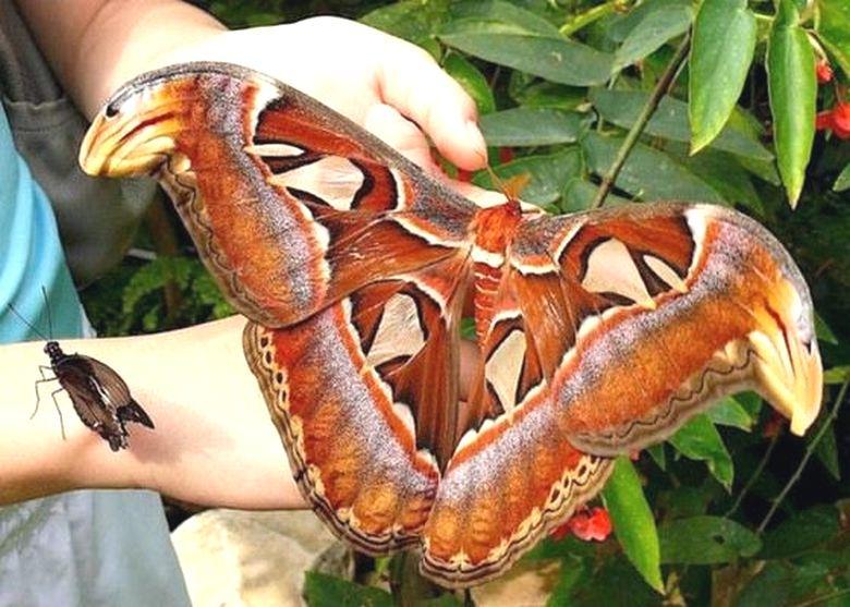 Юноша, влюбленный в бабочек, после смерти посылает через них привет своей сестре