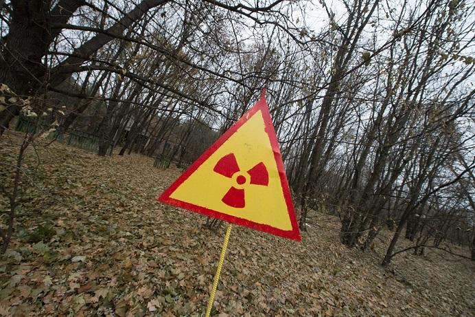 В Подмосковье обнаружили радиоактивный лес